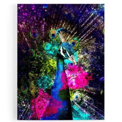 tableau-cadre-paon-poparts-coloré-bleu-violet-rose-oiseau
