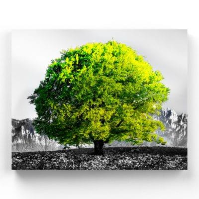 tableau arbre coloré arbre vert