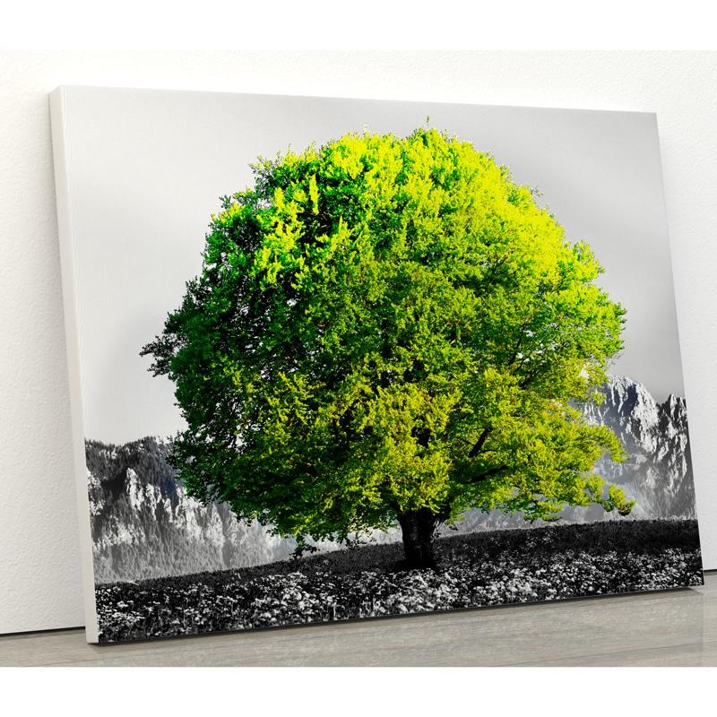 tableau arbre vert arbre coloré