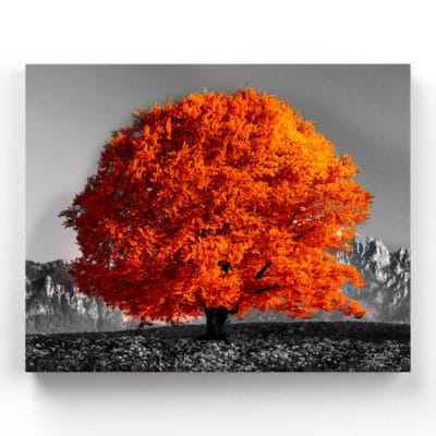 tableau arbre orange