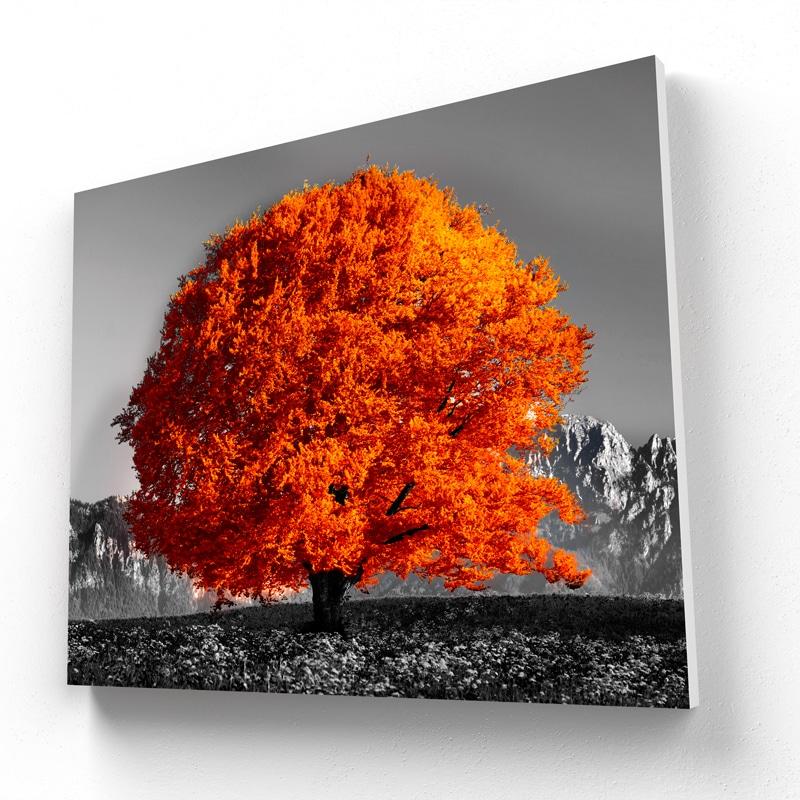 tableau orange arbre coloré orange